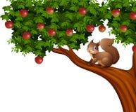 Cartoon squirrel on apple tree Stock Image