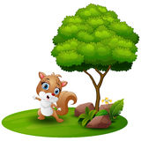 Cartoon squirrel dancing under a tree on a white background Stock Image
