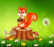 Cartoon squirrel holding pine cone on tree stump in summer season background stock illustration