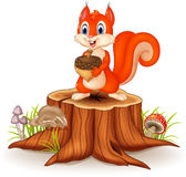 Cartoon Squirrel Holding Pinecone On Tree Stump Stock Photography