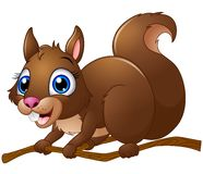 Cartoon Squirrel Royalty Free Stock Images