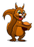 Cartoon squirrel with nut. Cartoon squirrel mascot with nut isolated on white background Royalty Free Stock Images