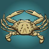 Cartoon style crab vector illustration. Hand-drawn ocean inhabitant.  Royalty Free Stock Image