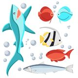 Cartoon style fish and water bubbles. Shark, sardine, discus, zebrasoma, butterfly fish, Isolated on white background. Stock Image