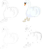 Cartoon swan with her chicks. Vector illustration. Dot to dot ga Royalty Free Stock Photos