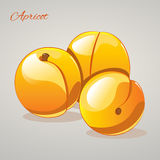 Cartoon sweet appricots on grey background, vector illustration. Cartoon sweet appricots  on grey background, vector illustration. Fruits and vegetables Royalty Free Stock Photography