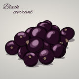 Cartoon sweet black currant on grey background, vector illustration. Cartoon sweet black currant  on grey background, vector illustration. Fruits and vegetables Royalty Free Stock Image