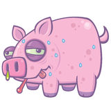 Cartoon Swine Flu Pig. Vector cartoon illustration of a sweaty, sick pig with the Swine Flu stock illustration