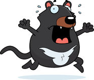 Cartoon Tasmanian Devil Panic Royalty Free Stock Photography