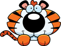 Cartoon Tiger Cub Peeking Royalty Free Stock Image