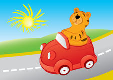 Cartoon tiger drives a car. Cartoon tiger is travelling in a red car Royalty Free Stock Photos