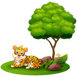 Cartoon Tiger Lay Down Under A Tree On A White Background Stock Photography