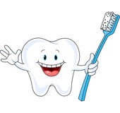 Cartoon Tooth Character. Holding toothbrush Royalty Free Stock Image