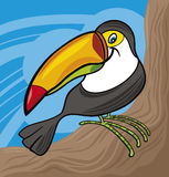 Cartoon toucan Stock Images