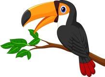 Cartoon toucan bird on a tree branch Stock Photos