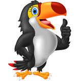 Cartoon toucan gives thumb up Royalty Free Stock Image