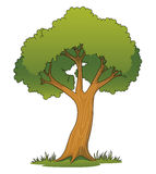 Cartoon Tree Royalty Free Stock Image