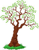 Cartoon Tree with green leafage Stock Photography