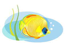 Cartoon tropical fish Royalty Free Stock Photos