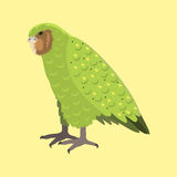 Cartoon tropical kakapo parrot wild animal bird vector illustration wildlife feather zoo color nature vivid. Cartoon tropical kakapo parrot wild animal bird Royalty Free Stock Images