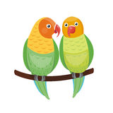 Cartoon tropical lovebird parrot wild animal bird vector illustration wildlife zoo couple nature vivid. Cartoon tropical lovebird parrot wild animal bird vector Royalty Free Stock Images