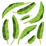Cartoon tropical palm leaves. Vector illustrated on white Royalty Free Stock Photos