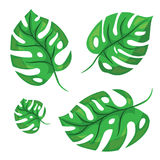 Cartoon tropical palm leaves. Vector illustrated on white Stock Photo
