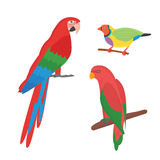 Cartoon tropical parrot wild animal bird vector illustration. Stock Images