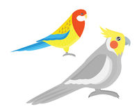 Cartoon tropical parrot wild animal bird vector illustration. Royalty Free Stock Photography