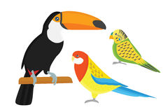 Cartoon tropical parrot wild animal bird vector illustration. Wildlife cute feather zoo color nature vivid. Perch tropics fly fauna jungle pretty macaw Stock Photos