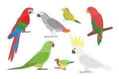 Cartoon tropical parrot wild animal bird vector illustration. Royalty Free Stock Photo