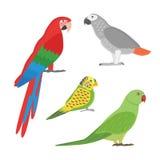 Cartoon tropical parrot wild animal bird vector illustration. Stock Images