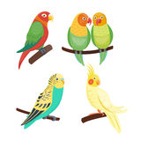 Cartoon tropical parrot wild animal bird vector illustration wildlife feather zoo color nature vivid. Cartoon tropical parrot wild animal bird vector Royalty Free Stock Image
