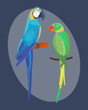 Cartoon tropical parrot wild animal bird vector illustration wildlife feather zoo color nature vivid. Stock Image