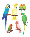 Cartoon tropical parrot wild animal bird vector illustration wildlife feather zoo color nature vivid. Cartoon tropical parrot wild animal bird vector Stock Illustration