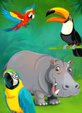 Cartoon tropical or safari - illustration for the children Royalty Free Stock Photos