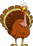 Cartoon turkey Royalty Free Stock Photos