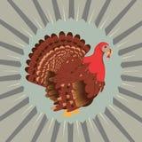 Cartoon Turkey Bird Stock Image