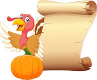Cartoon turkey with vintage scroll paper isolated on white background Stock Images