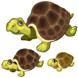 Cartoon turtle on white background. Vector animals Royalty Free Stock Image