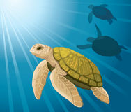 Cartoon turtles and sea Royalty Free Stock Image
