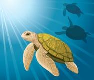 Cartoon turtles and sea Royalty Free Stock Image