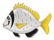 Cartoon twobar seabream Stock Photos