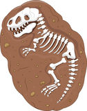 Cartoon Tyrannosaurus rex fossil Stock Photo