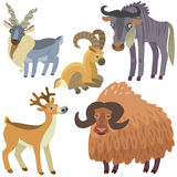 Cartoon ungulate animals set. Illustration of ungulate animals on white background Royalty Free Stock Photography