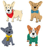 Cartoon vector character french bulldog Royalty Free Stock Images