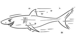 Cartoon Vector of Dangerous Smiling Shark. Cartoon vector of shark dangerously smiling Stock Image