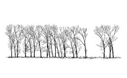 Cartoon Vector Drawing of Group or Alley of Poplar Trees in the Far. Cartoon vector doodle drawing illustration of group or alley of broadleaved or deciduous Royalty Free Stock Photos