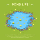 Cartoon vector garden pond illustration with water, plants and animals. Royalty Free Stock Image