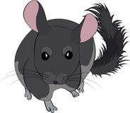 Cartoon vector illustration of cute chinchilla. Cartoon vector illustration of cute gray chinchilla isolated on white Royalty Free Stock Images